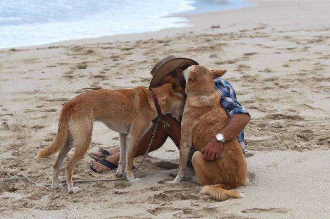 dingoes gary taylor