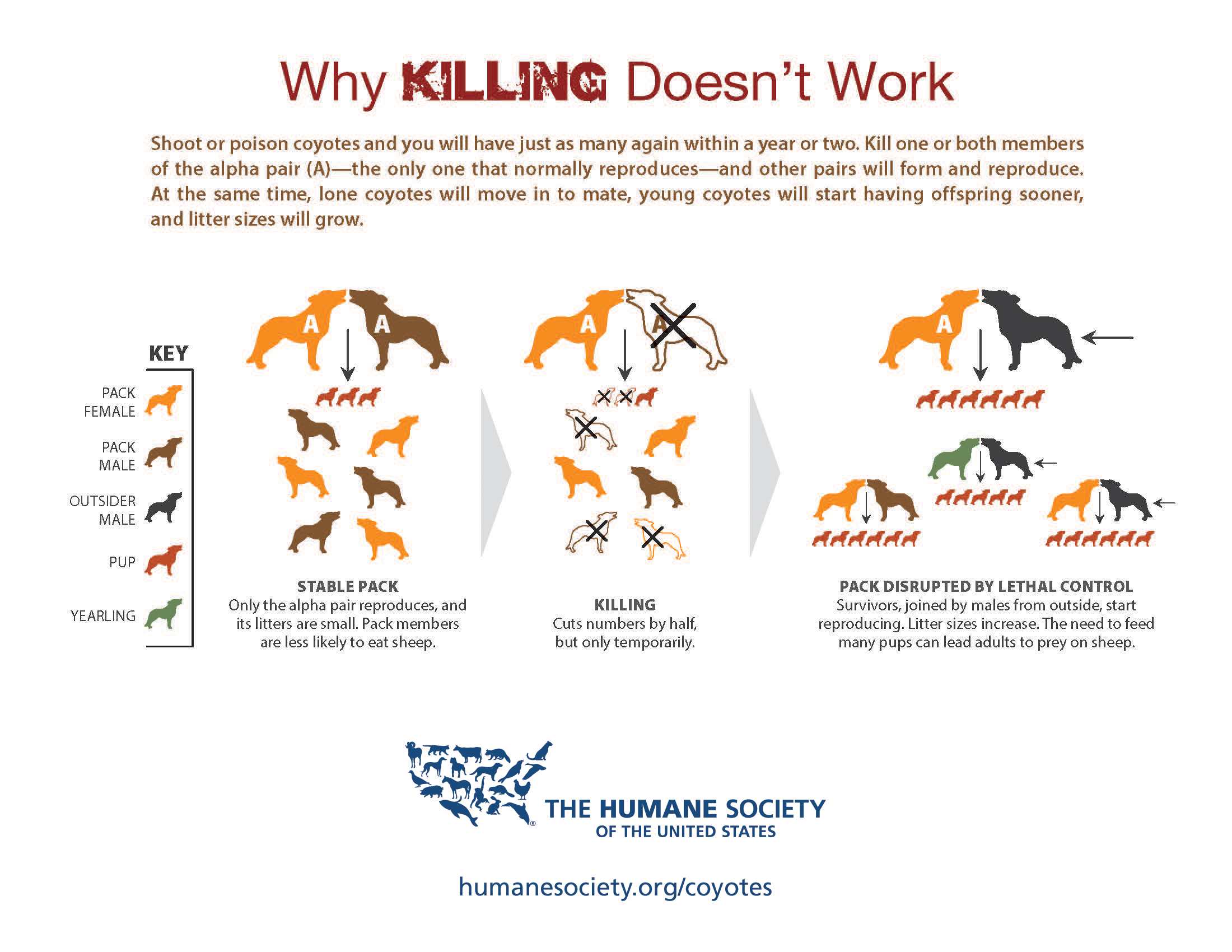 coyote-killing-infographic.jpg