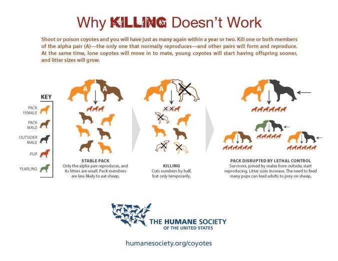 coyote-killing-infographic.jpg